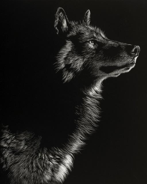 Scratchboard Wolf II