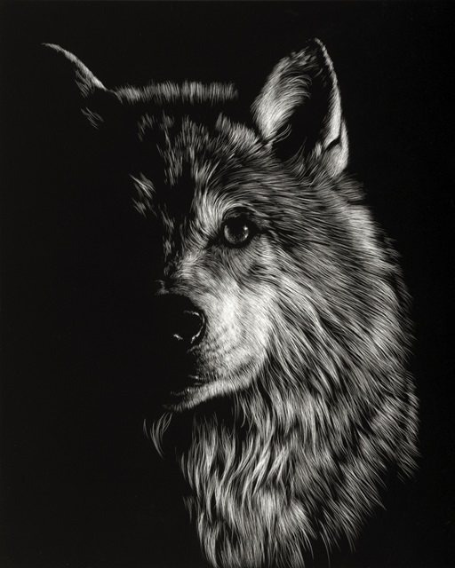 Scratchboard Wolf III
