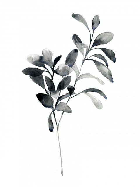 Brume Botanical I