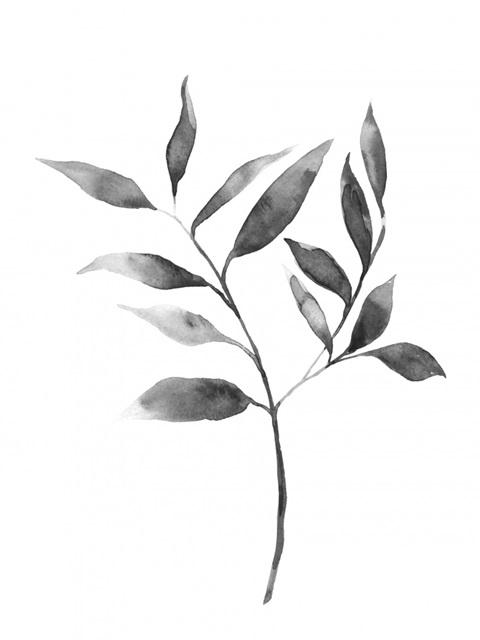 Brume Botanical II