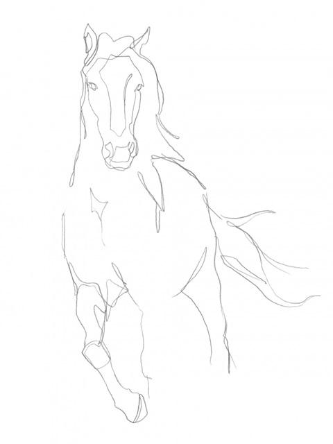 Horse Contour II