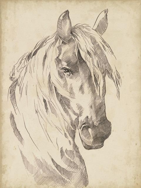 Horse Portrait Sketch I