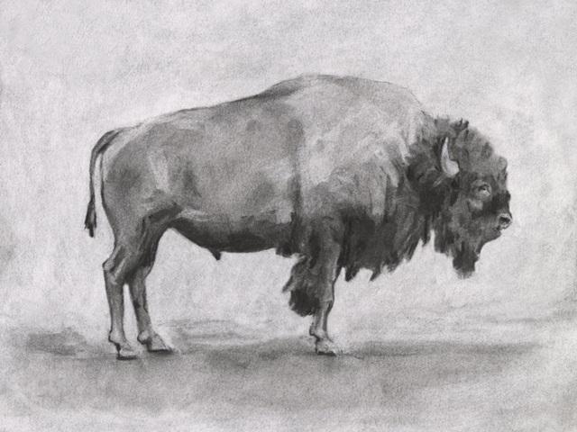 Wild Bison Study I