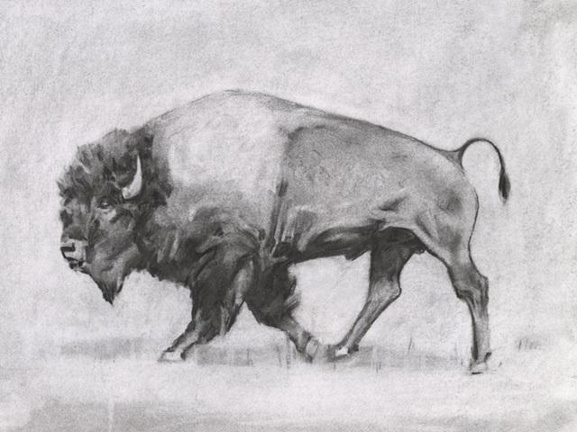 Wild Bison Study II