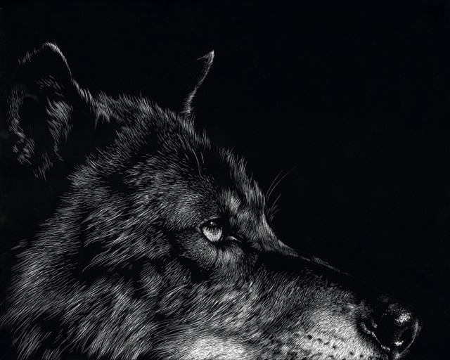 Scratchboard Wolf I
