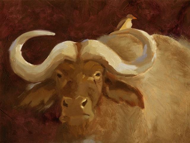Cape Buffalo II