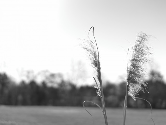 Ethereal Pampas VII