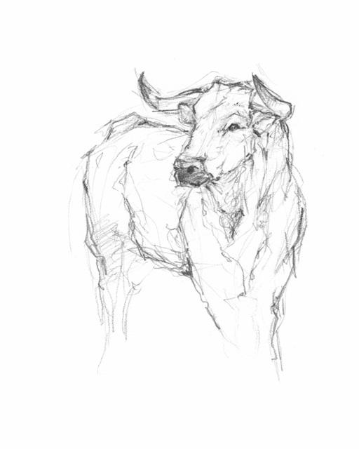 Bull Study I