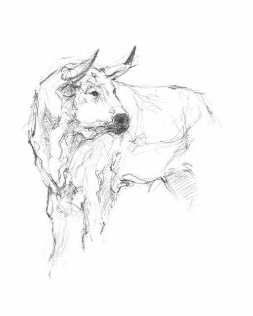 Bull Study II