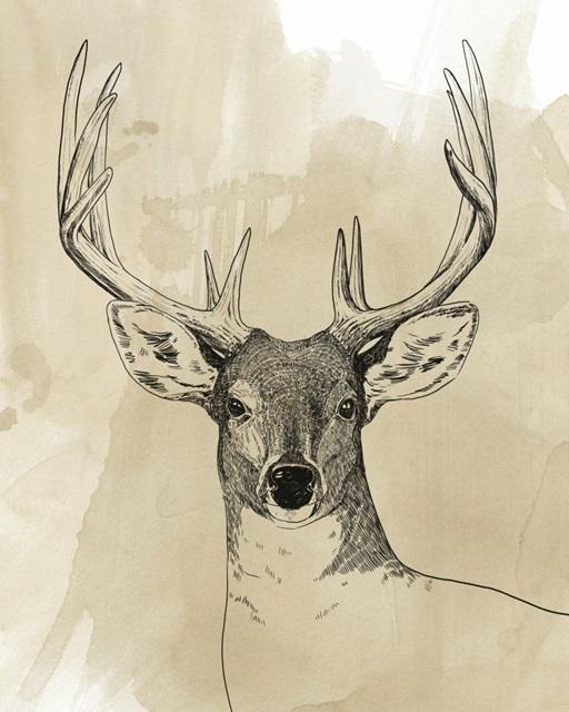 Burnished Buck II