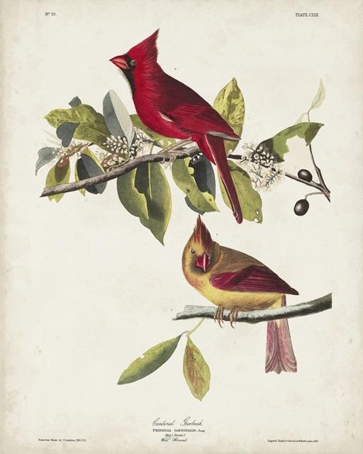 Pl 158 Cardinal Grosbeak