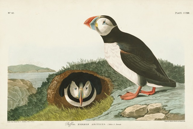 Pl 213 Puffin