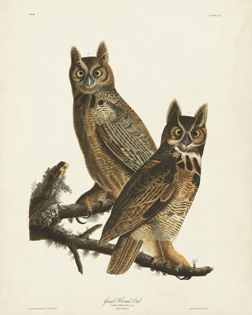 Pl 61 Great Horned Owl