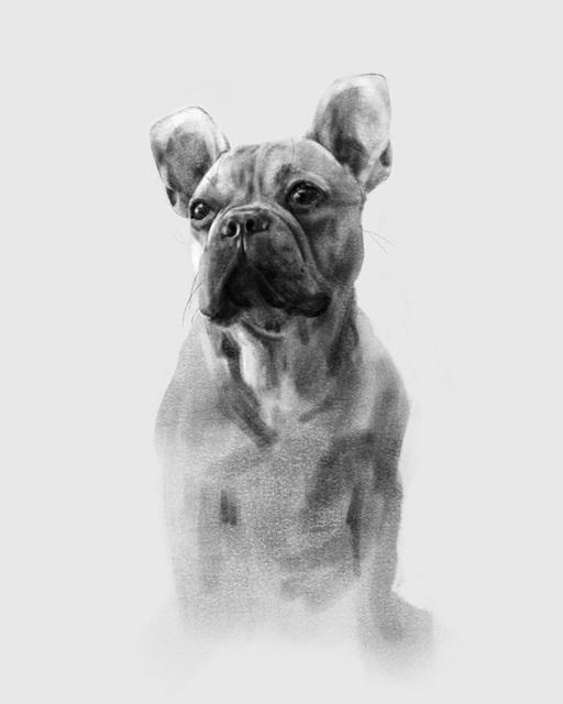 Pug Portrait I
