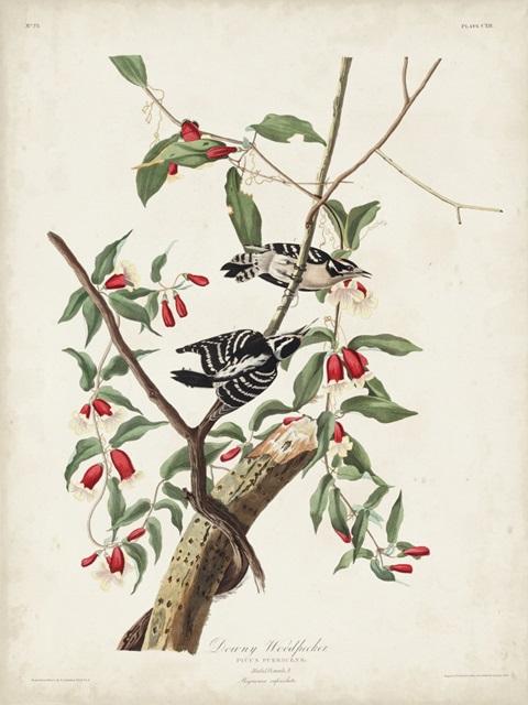 Pl. 112 Downy Woodpecker
