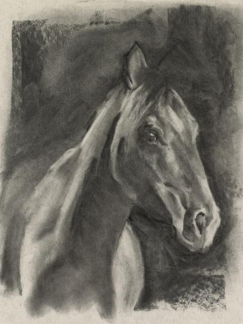 Charcoal Horse Study on Grey I