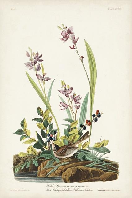 Pl. 139 Field Sparrow