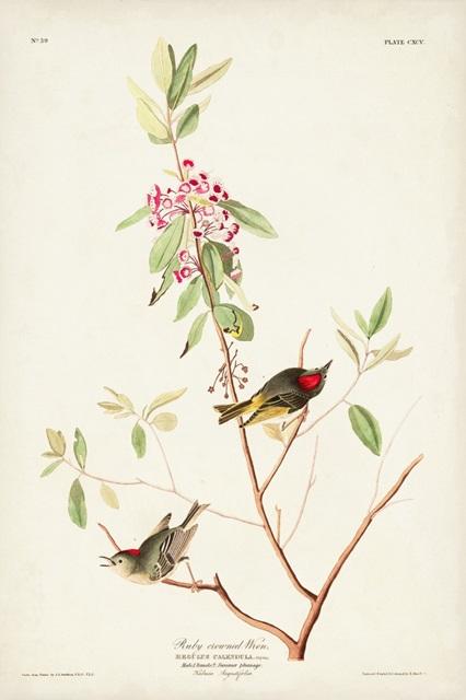 Pl. 195 Ruby-crowned Wren