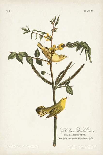 Pl. 35 Children's Warbler