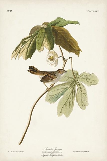 Pl. 64 Swamp Sparrow
