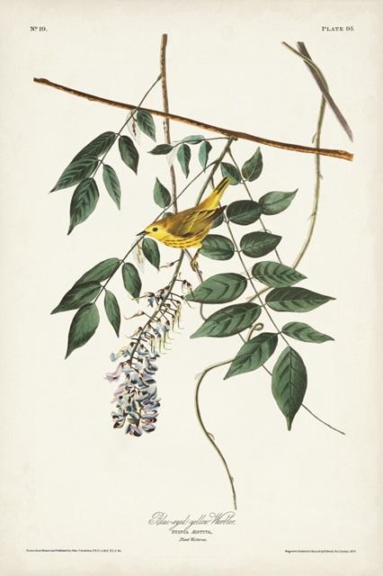 Pl. 95 Blue-eyed Yellow Warbler