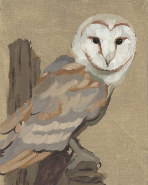 Common Barn Owl Portrait I