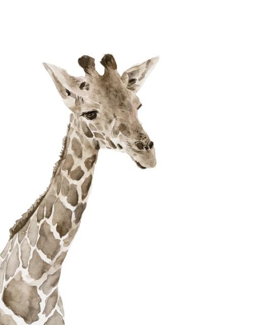 Safari Animal Portraits II