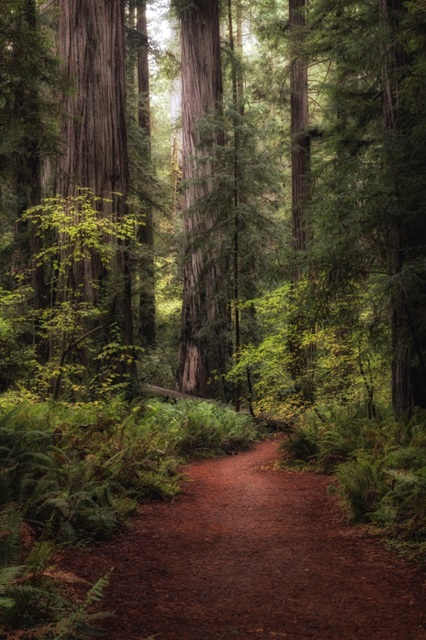 Forest Path I