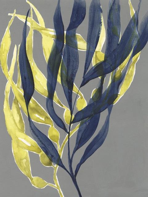 Kelp Embrace II