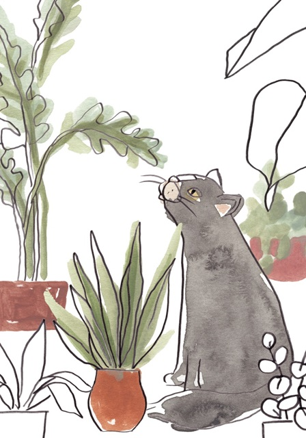 Purrfect Plants Collection B