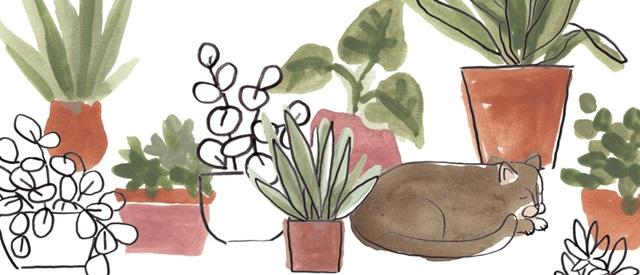 Purrfect Plants Collection D