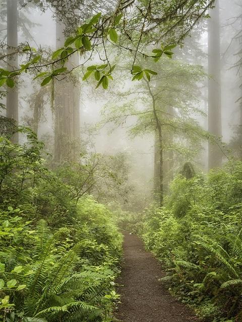 Summer Forest I