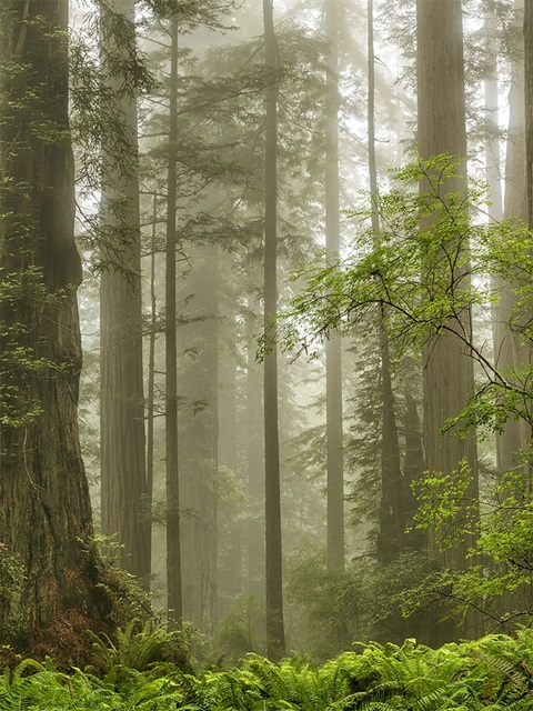 Summer Forest II