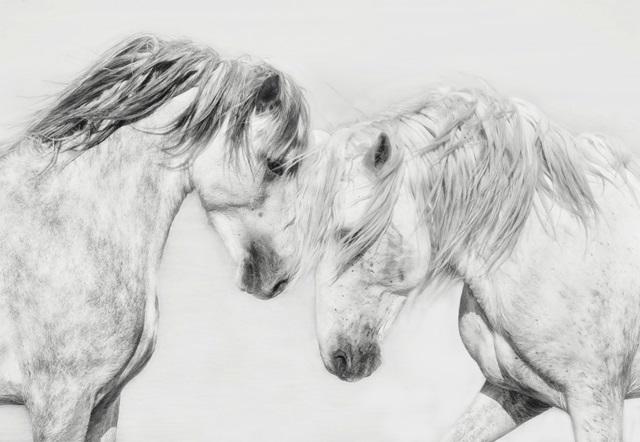 Equine Portrait I