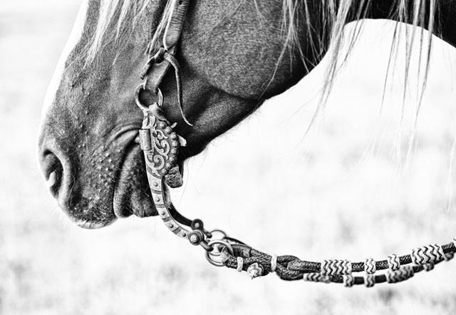Equine Portrait II