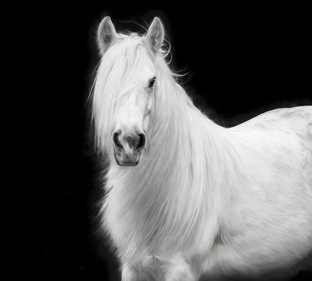 Equine Portrait V
