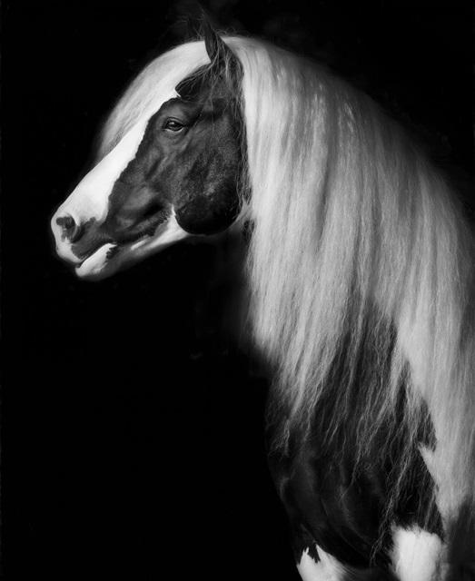 Equine Portrait VII