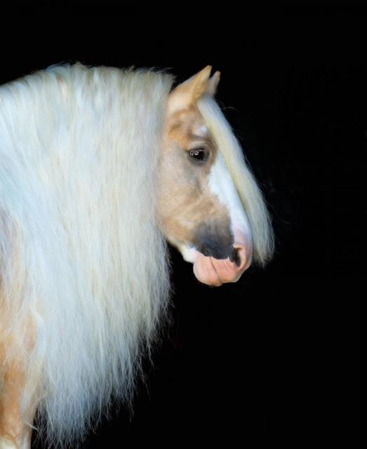 Equine Portrait VIII
