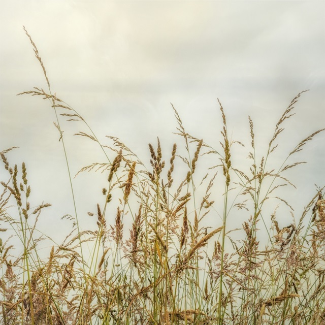 Bluff Grass I
