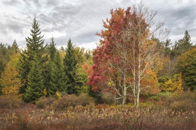 Woodland Variety