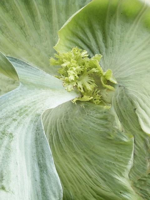 Banana Leaf II