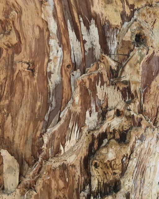 Tree Texture Triptych I