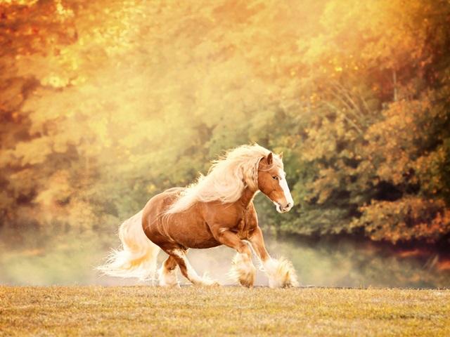 Horse Motion II