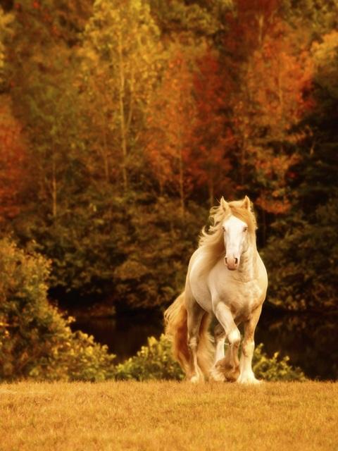 Horse Motion IX