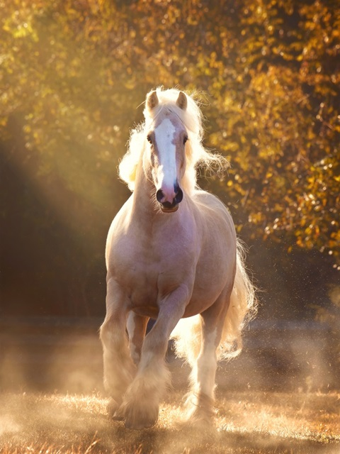 Horse Motion VIII