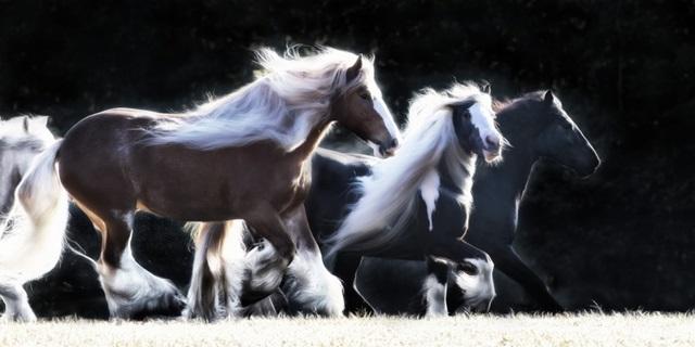 Horse Motion X