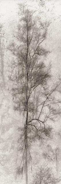 Tree Triptych II