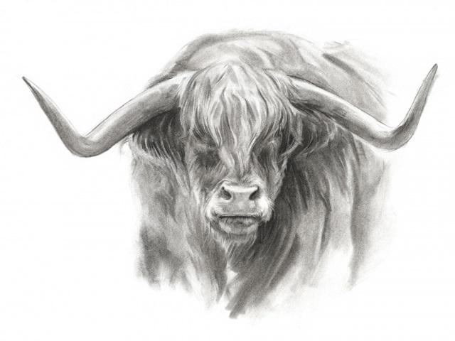 Soft Focus Highland Cattle II
