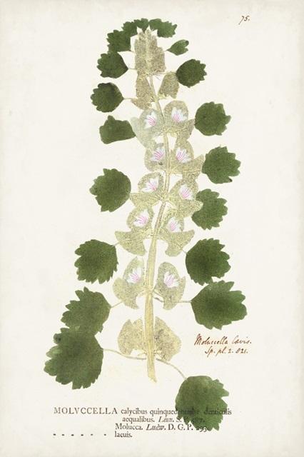 Nature Printed Ferns I