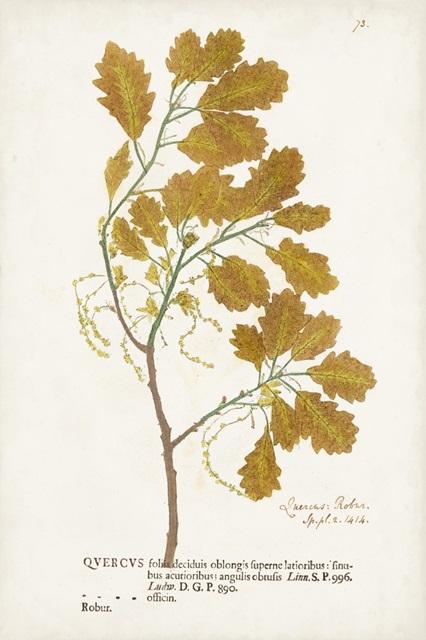 Nature Printed Ferns III